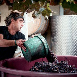 Edenflo Wines